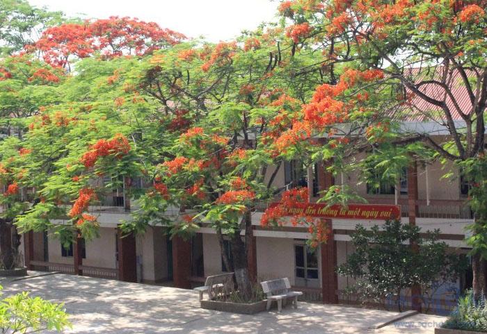Hình ảnh hoa phượng ở trường học