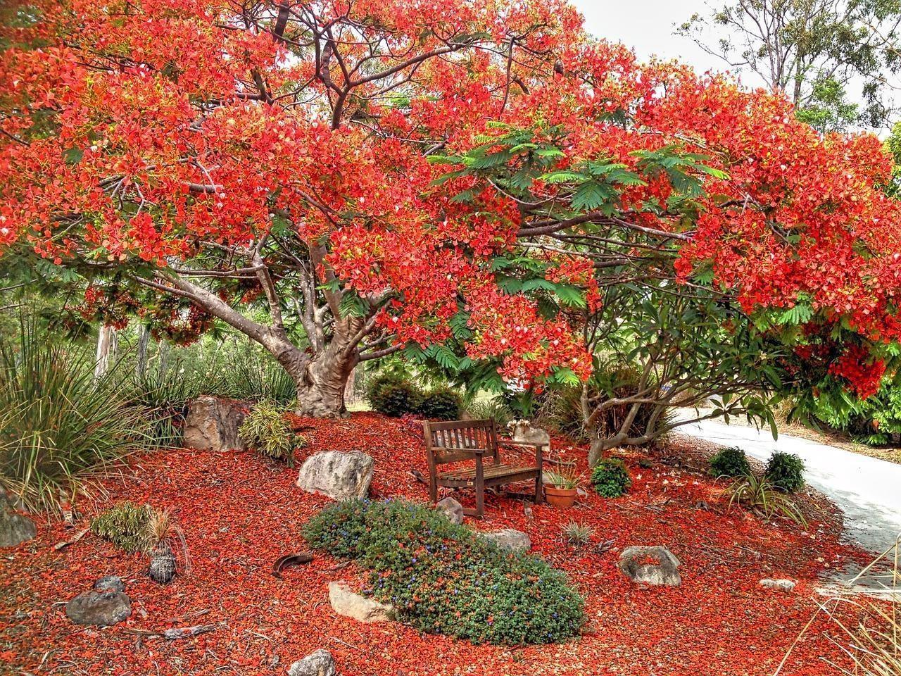 Hình ảnh vườn hoa phượng