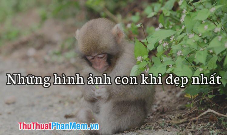 Những hình ảnh con khỉ đẹp nhất