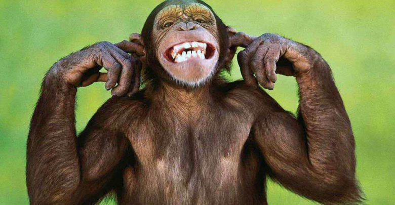 Hình ảnh chú khỉ đáng yêu
