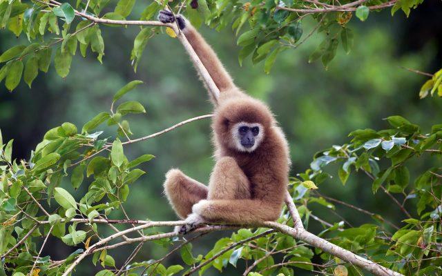 Hình ảnh chủ khỉ trên cây