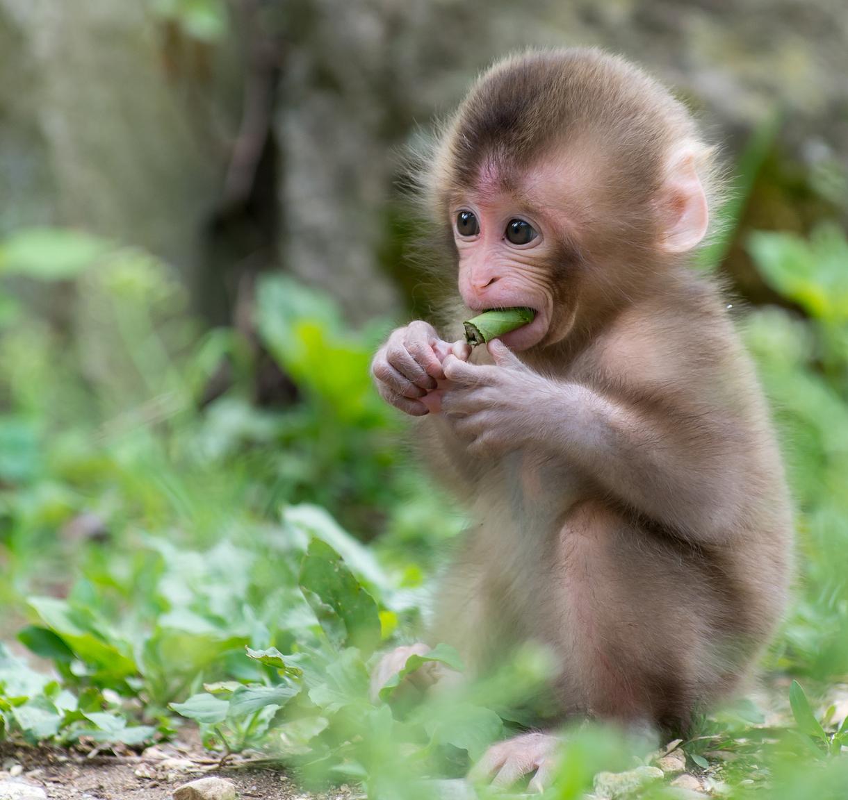 Hình ảnh con khỉ con đẹp nhất