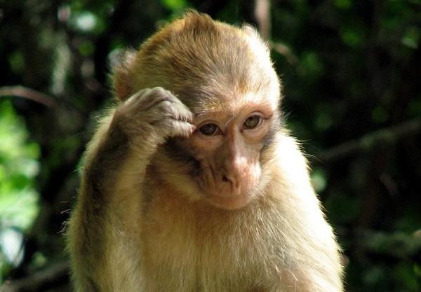 Hình ảnh con khỉ dễ thương