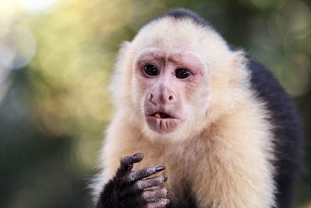 Hình ảnh con khỉ đẹp và đáng yêu