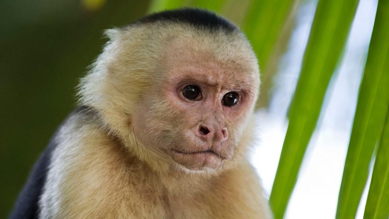 Hình ảnh con khỉ đẹp và dễ thương