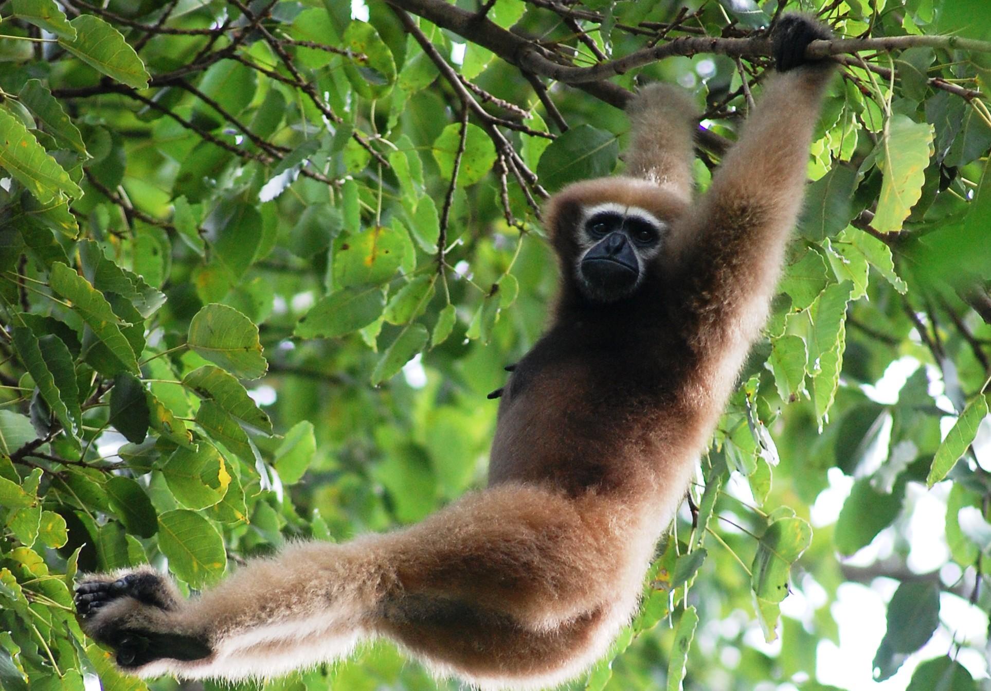 Hình ảnh con khỉ đu cây