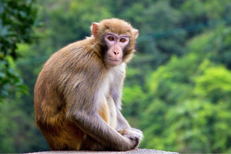 Hình ảnh con khỉ ngoài thiên nhiên