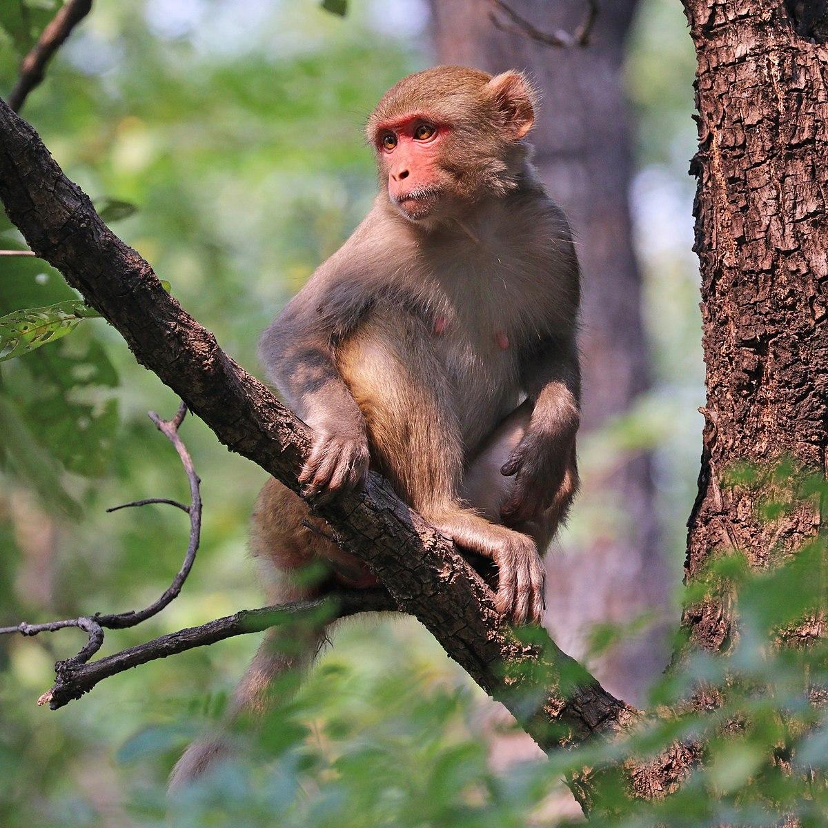 Hình ảnh con khỉ trên cây