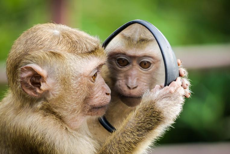 Hình ảnh con khỉ vàng ngộ nghĩnh