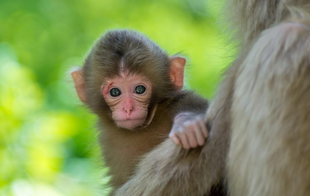 Hình ảnh con khỉ