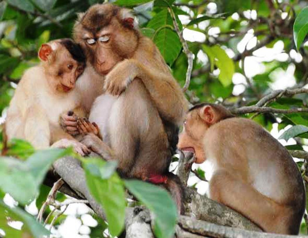 Hình ảnh đàn khỉ