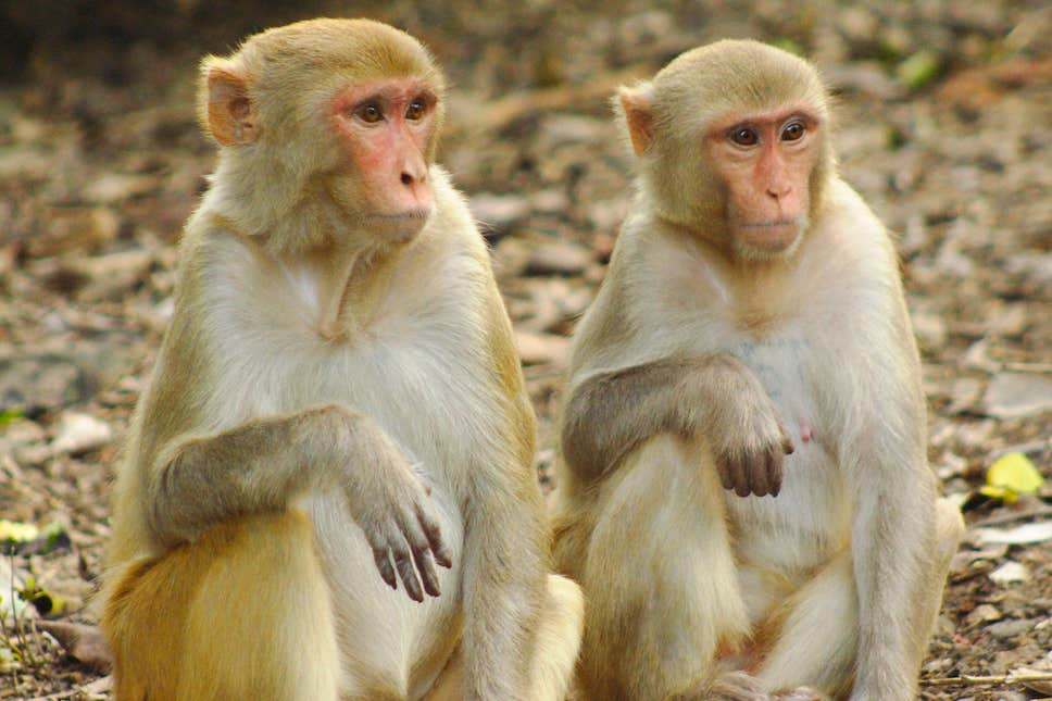 Hình ảnh đẹp về con khỉ