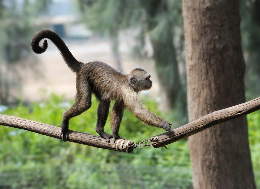 Hình ảnh đẹp về loài khỉ