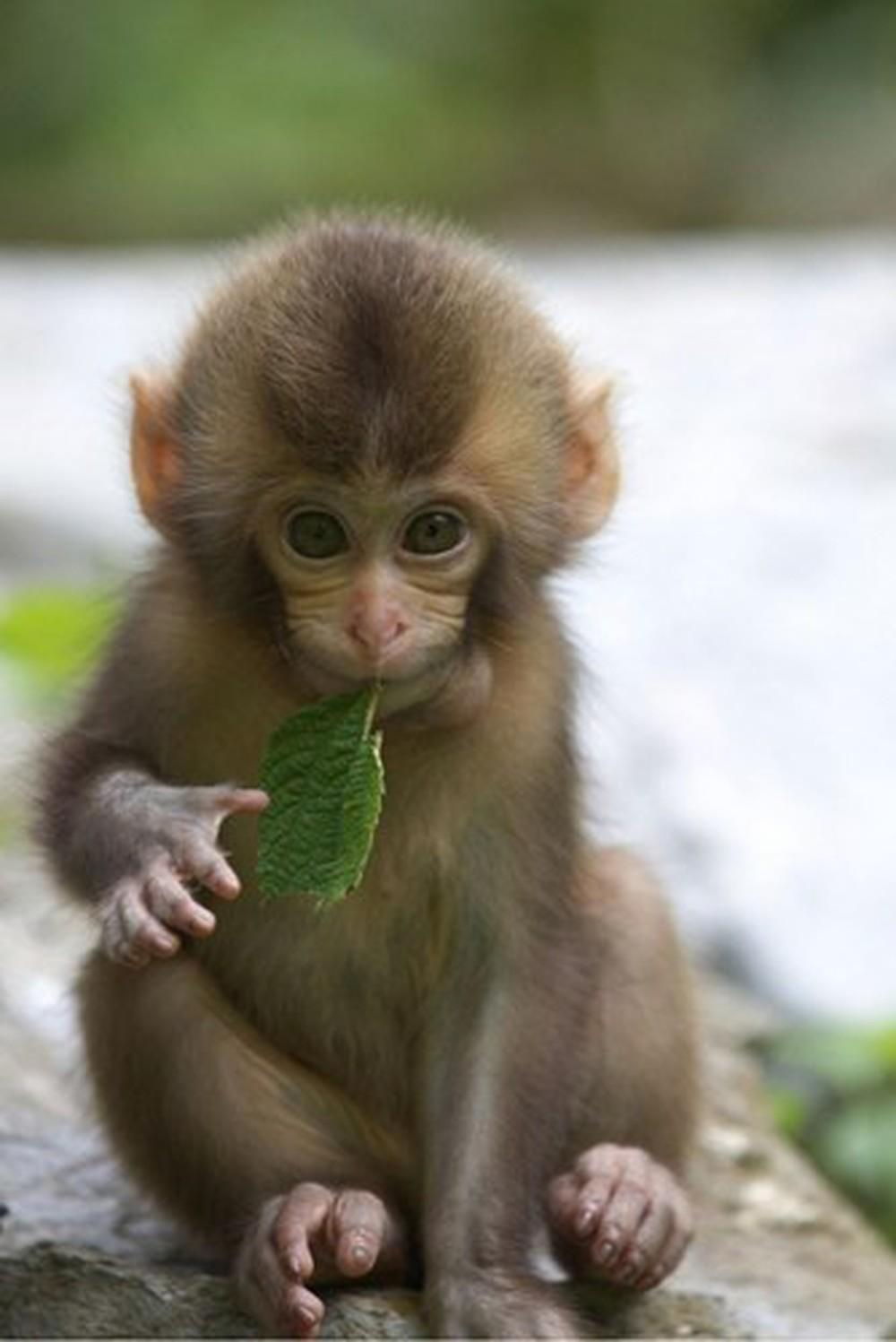 Hình ảnh khỉ con đáng yêu