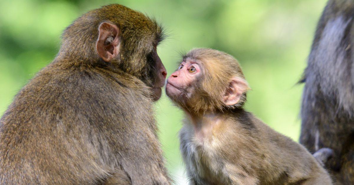 Hình ảnh khỉ dễ thương