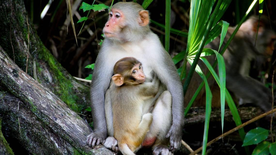 Hình ảnh khỉ đẹp nhất