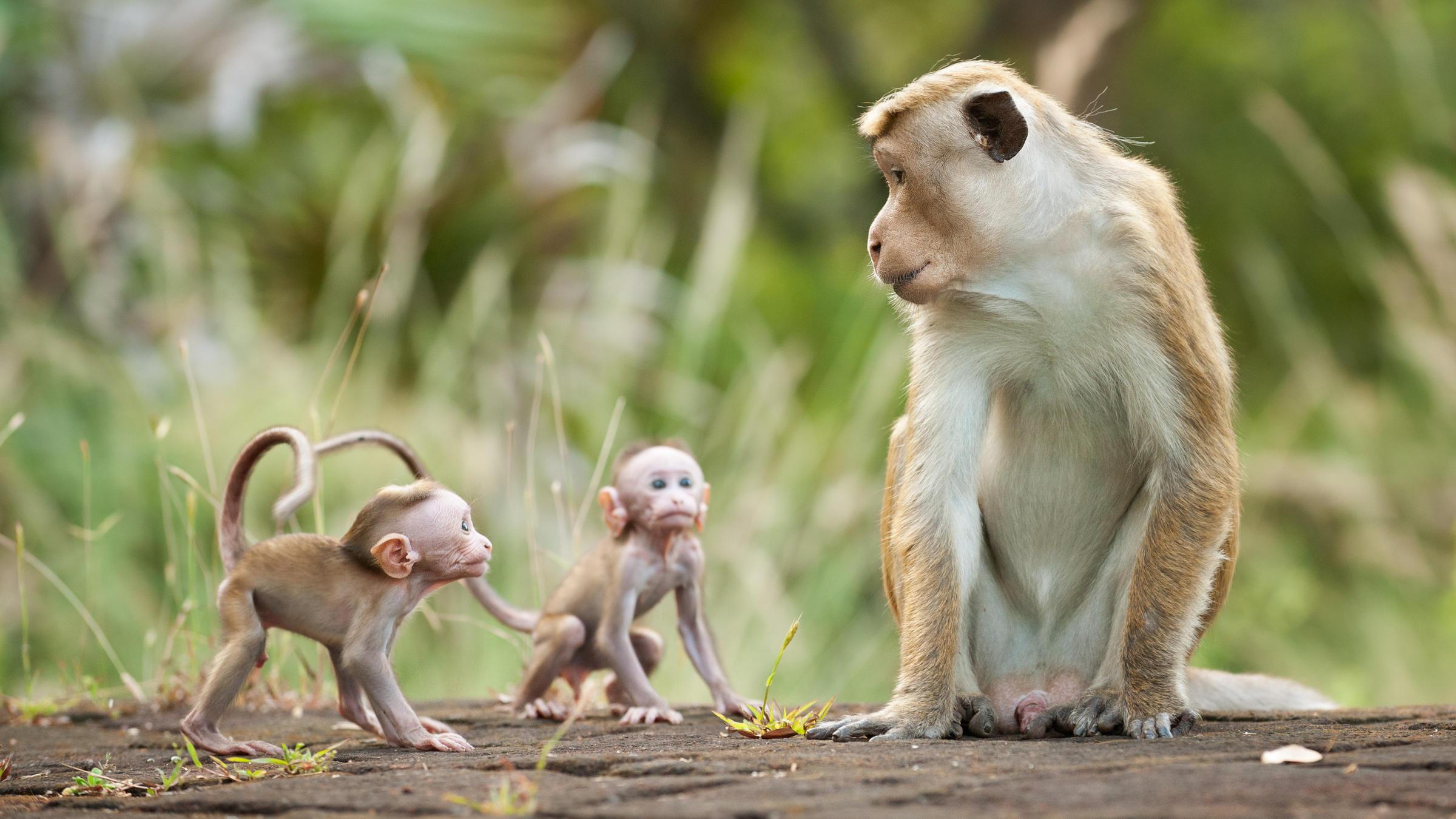 Hình ảnh khỉ mẹ và khỉ con