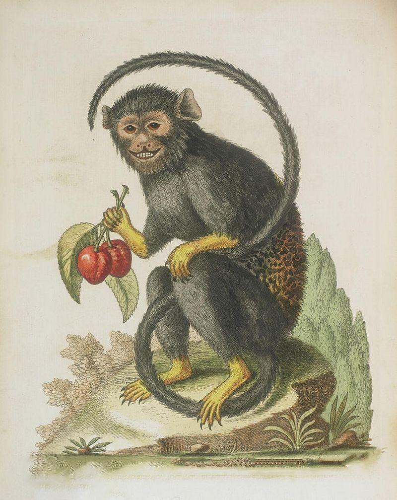Hình ảnh vẽ con khỉ