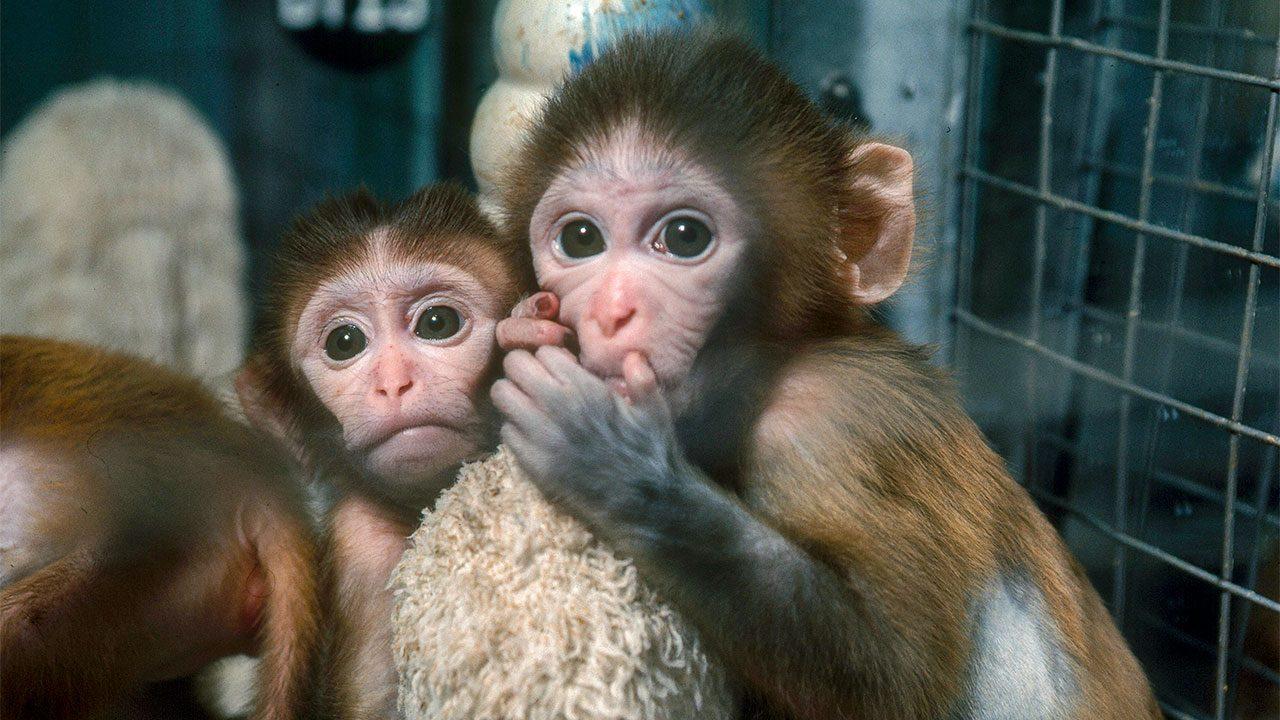 Hình ảnh về con khỉ