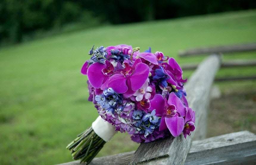 Ảnh bó hoa phong lan tím