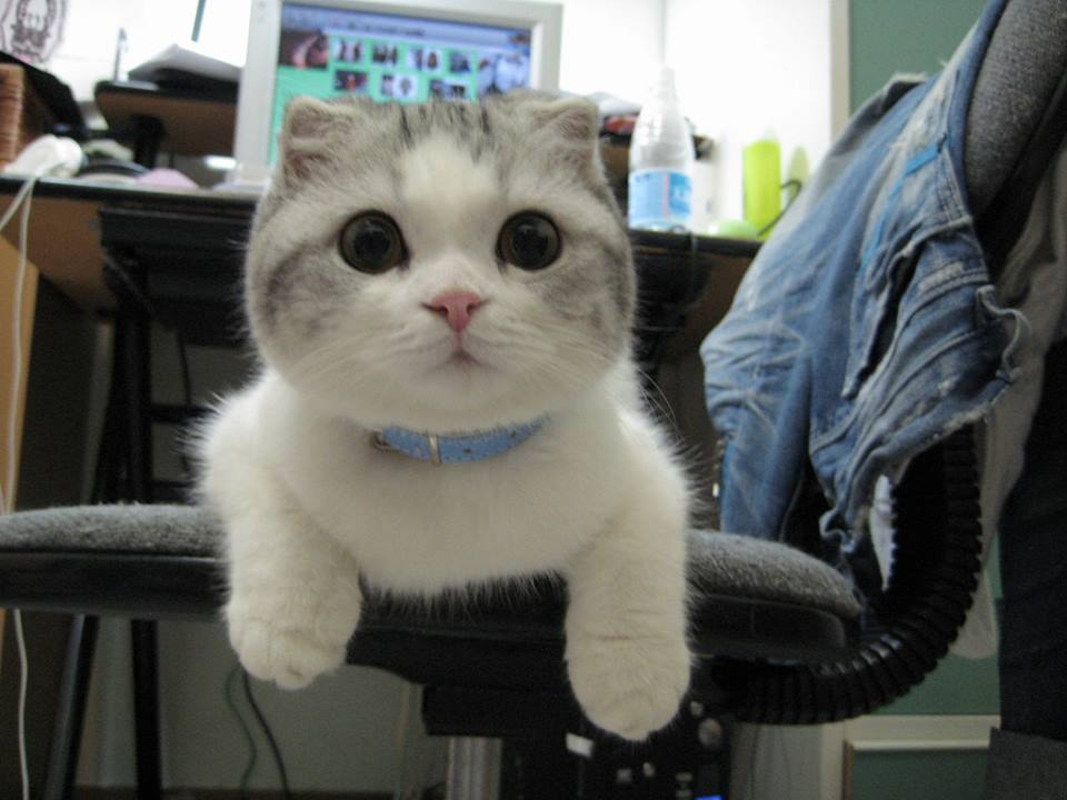 Ảnh chú mèo dễ thương