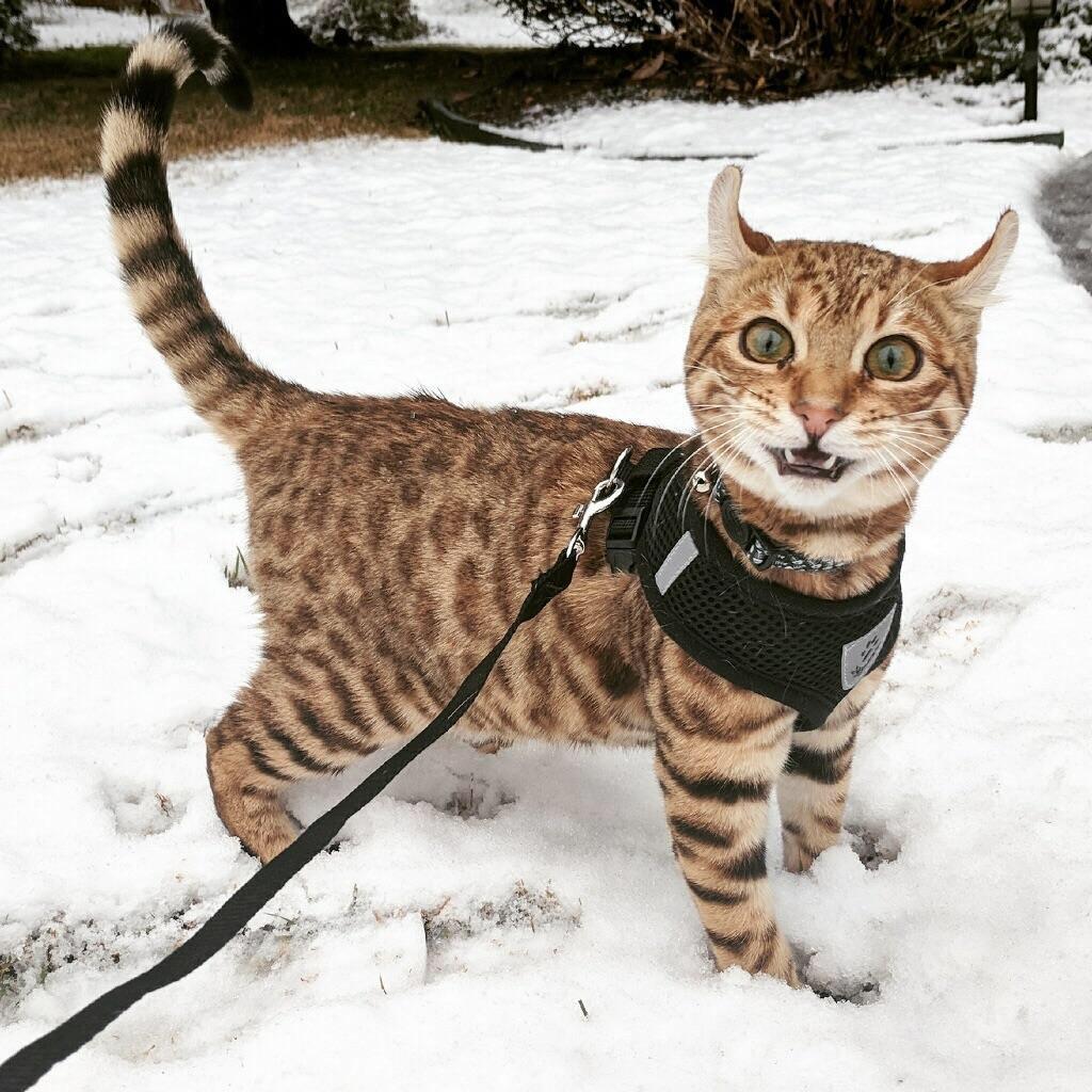 Ảnh chú mèo đẹp và dễ thương