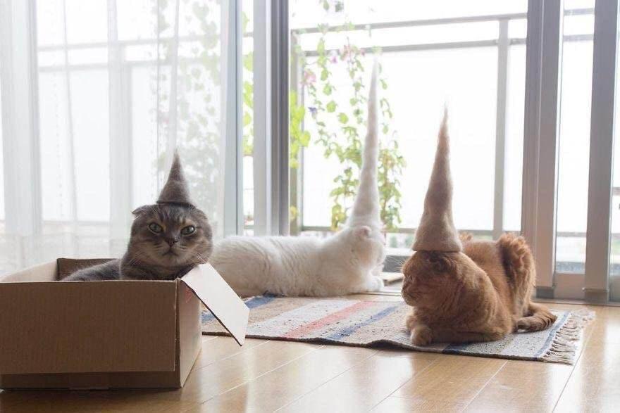 Ảnh chú mèo hài hước nhất