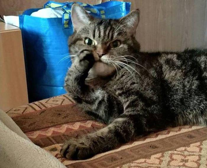 Ảnh chú mèo hài hước và dễ thương