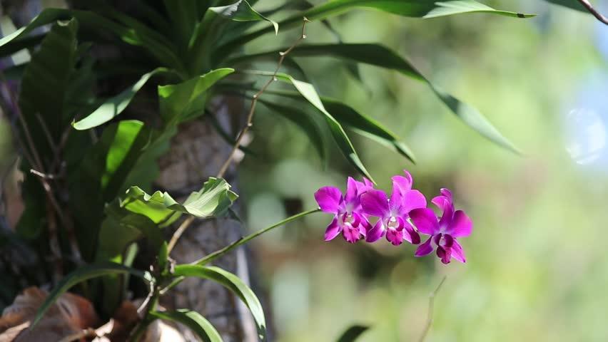 Ảnh hoa lan tím nhỏ đẹp