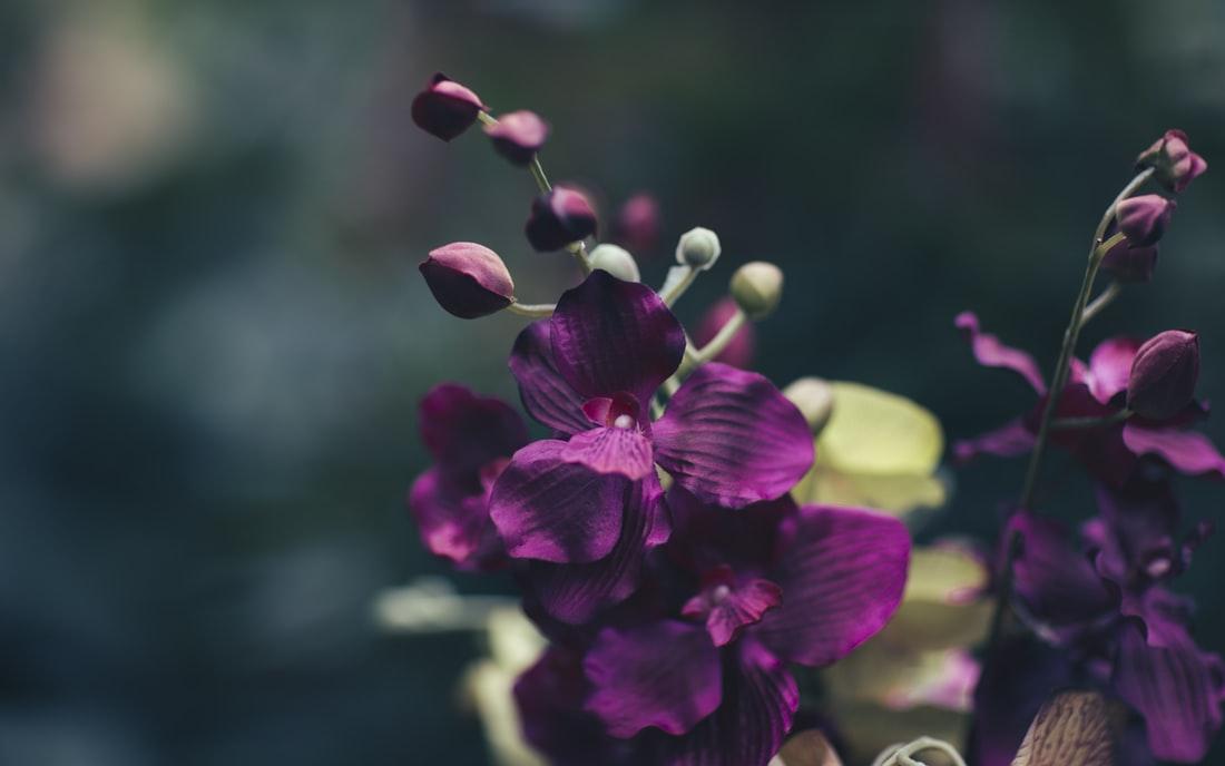 Cành hoa phong lan tím đẹp