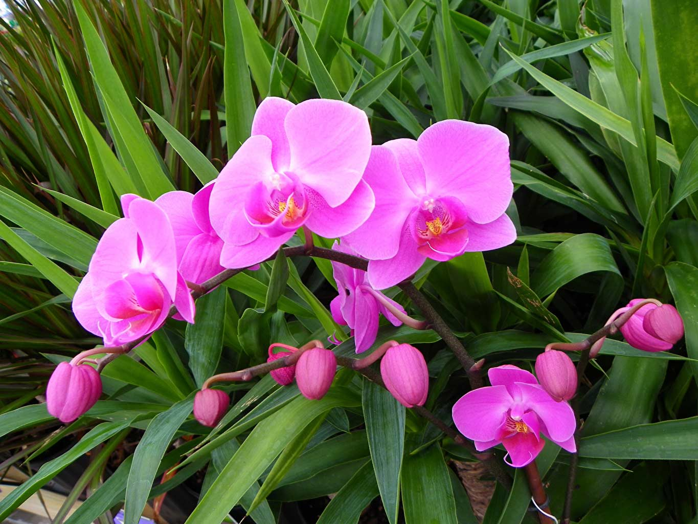Cây hoa phong lan tím đẹp