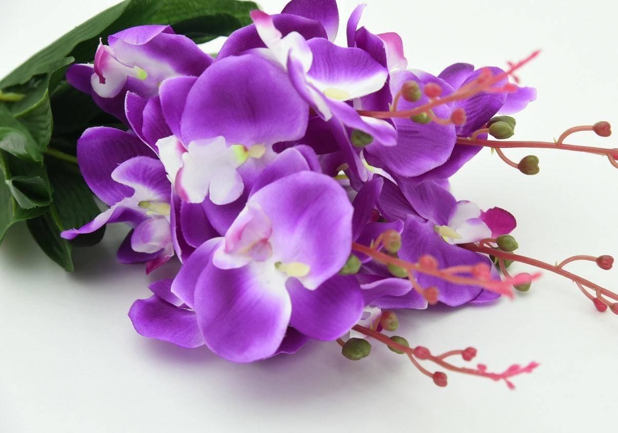 Hình ảnh bó hoa phong lan tím