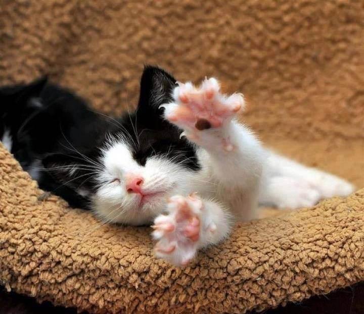 Hình ảnh chú mèo con dễ thương nhất