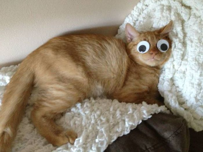 Hình ảnh chú mèo đang ngủ hài hước nhất