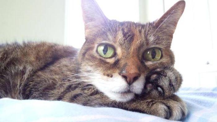 Hình ảnh chú mèo dễ thương và hài hước nhất