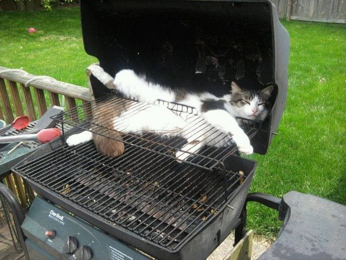 Hình ảnh chú mèo hài hước cực chất