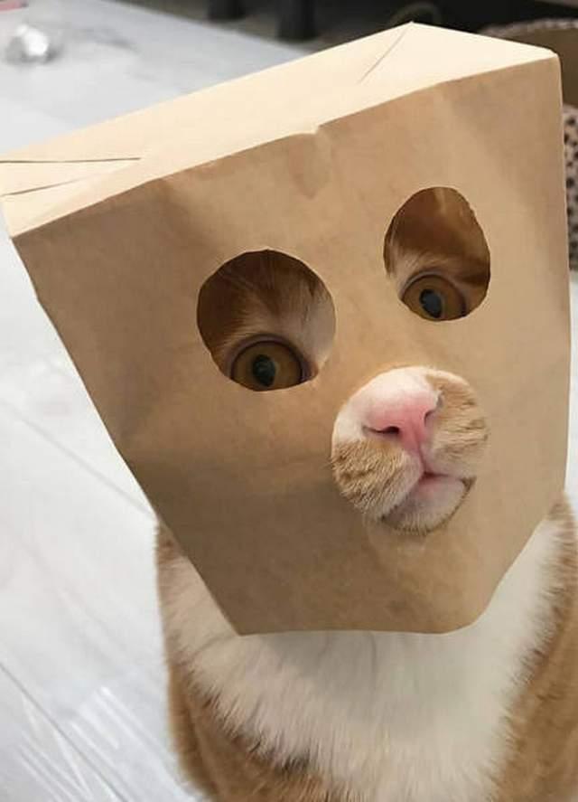 Hình ảnh chú mèo hài hước trong hộp