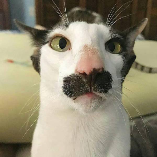 Hình ảnh chú mèo hài hước và dễ thương