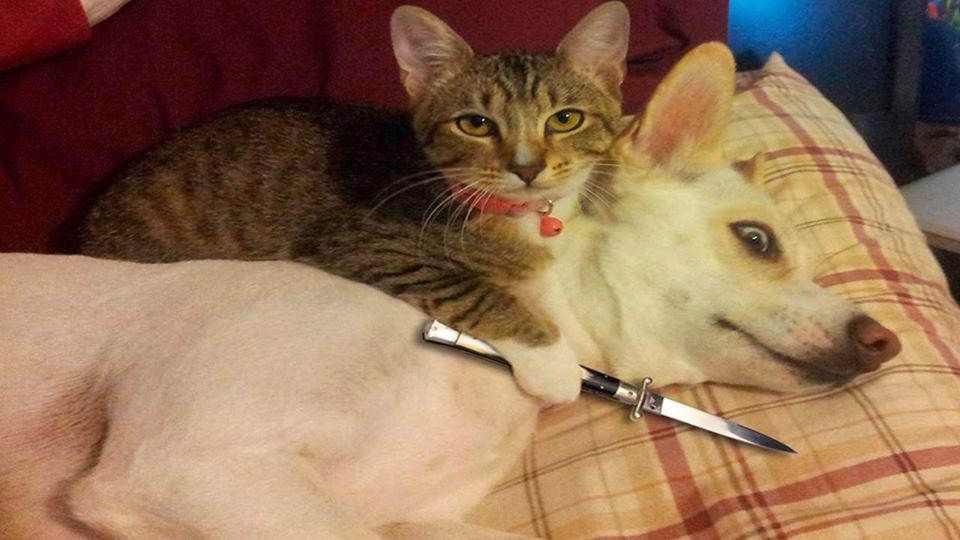 Hình ảnh chú mèo hài hước và ngầu
