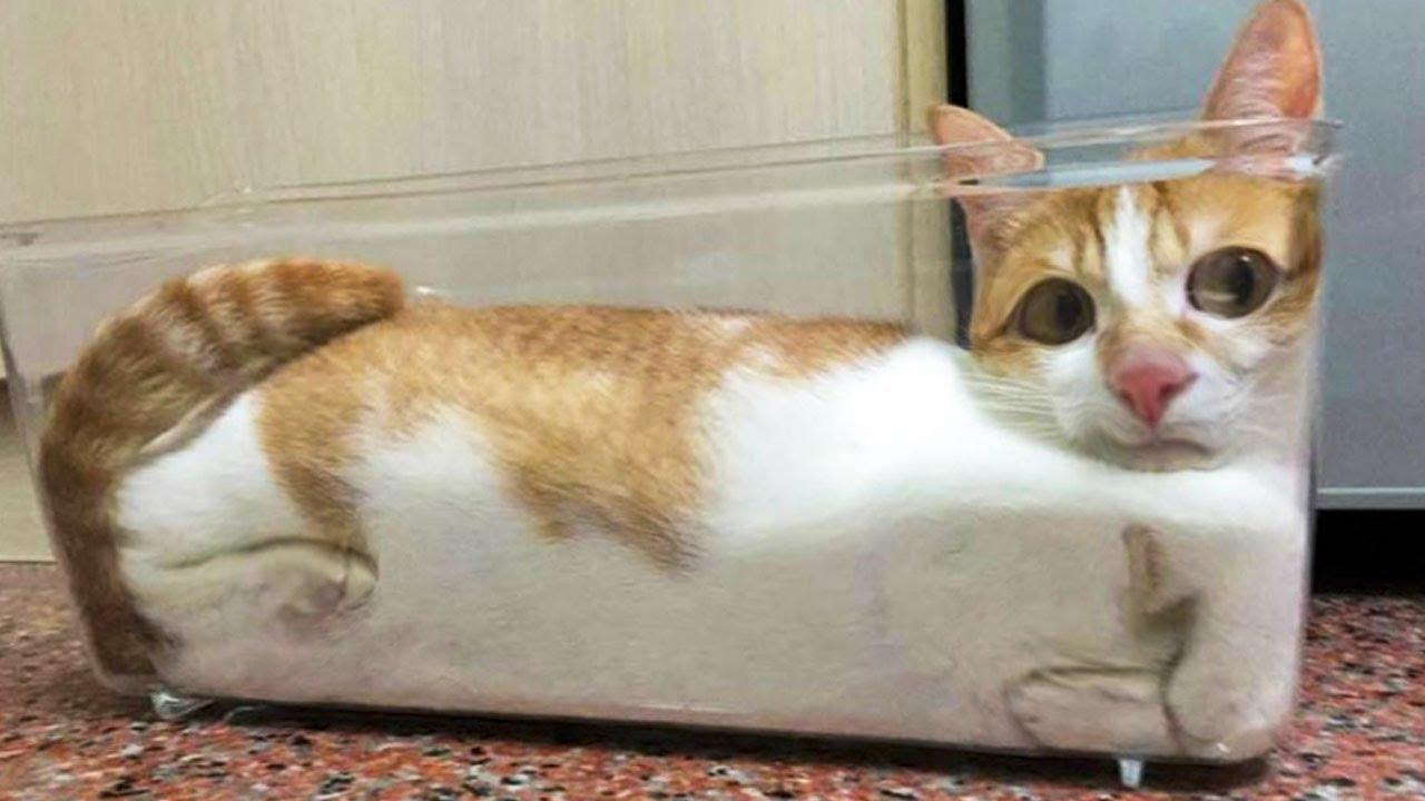 Hình ảnh chú mèo hài hước