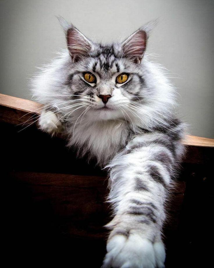 Hình ảnh chú mèo ngộ nghĩnh và hài hước