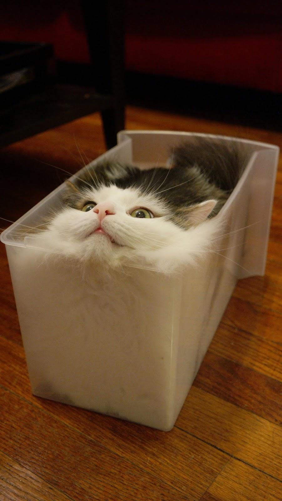 Hình ảnh chú mèo ngộ nghĩnh