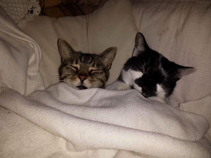 Hình ảnh đẹp và dễ thương về những chú mèo