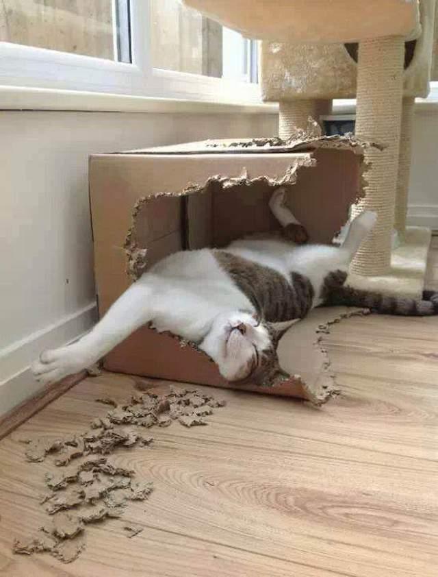 Hình ảnh đẹp về chú mèo