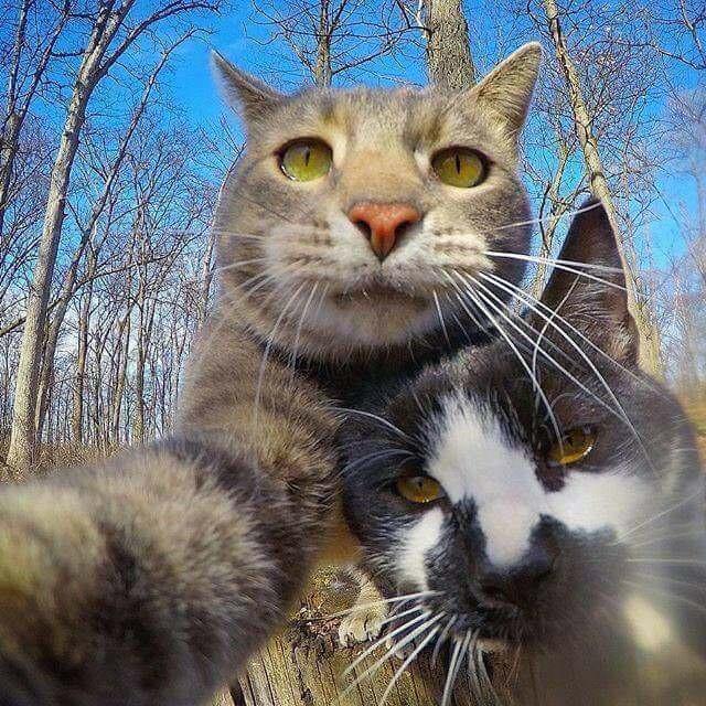 Hình ảnh mèo chụp ảnh tự sướng cực hài