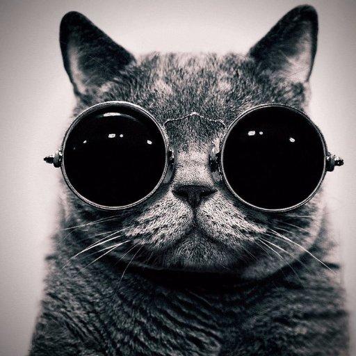 Hình ảnh mèo đeo kính hài hước