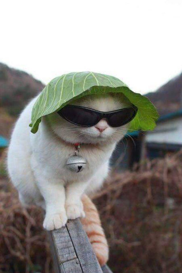 Hình ảnh mèo ngộ nghĩnh và dễ thương
