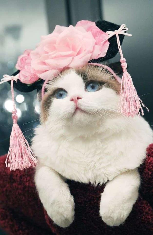 Hình ảnh mèo ngộ nghĩnh và hài hước