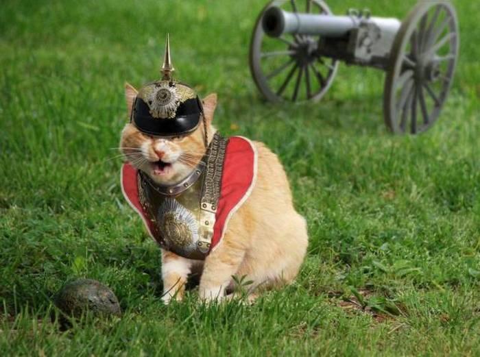 Hình ảnh mèo ngự lâm quân hài hước