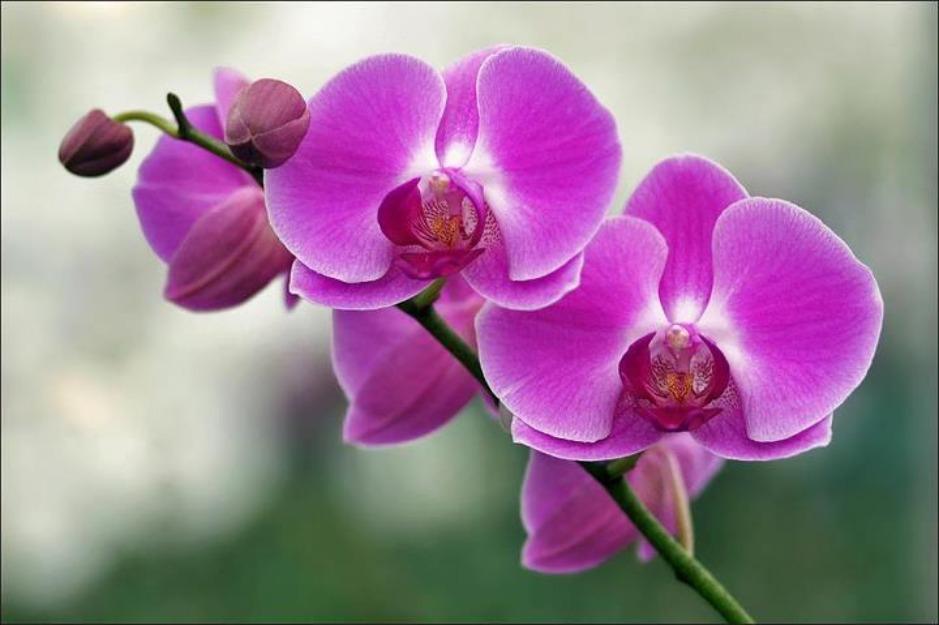 Hình ảnh những bông lan tím